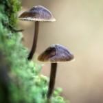Dans le lichen