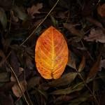 automne00001