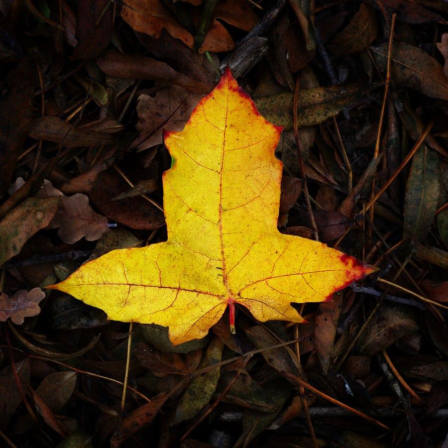 automne00003
