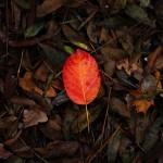 automne00004
