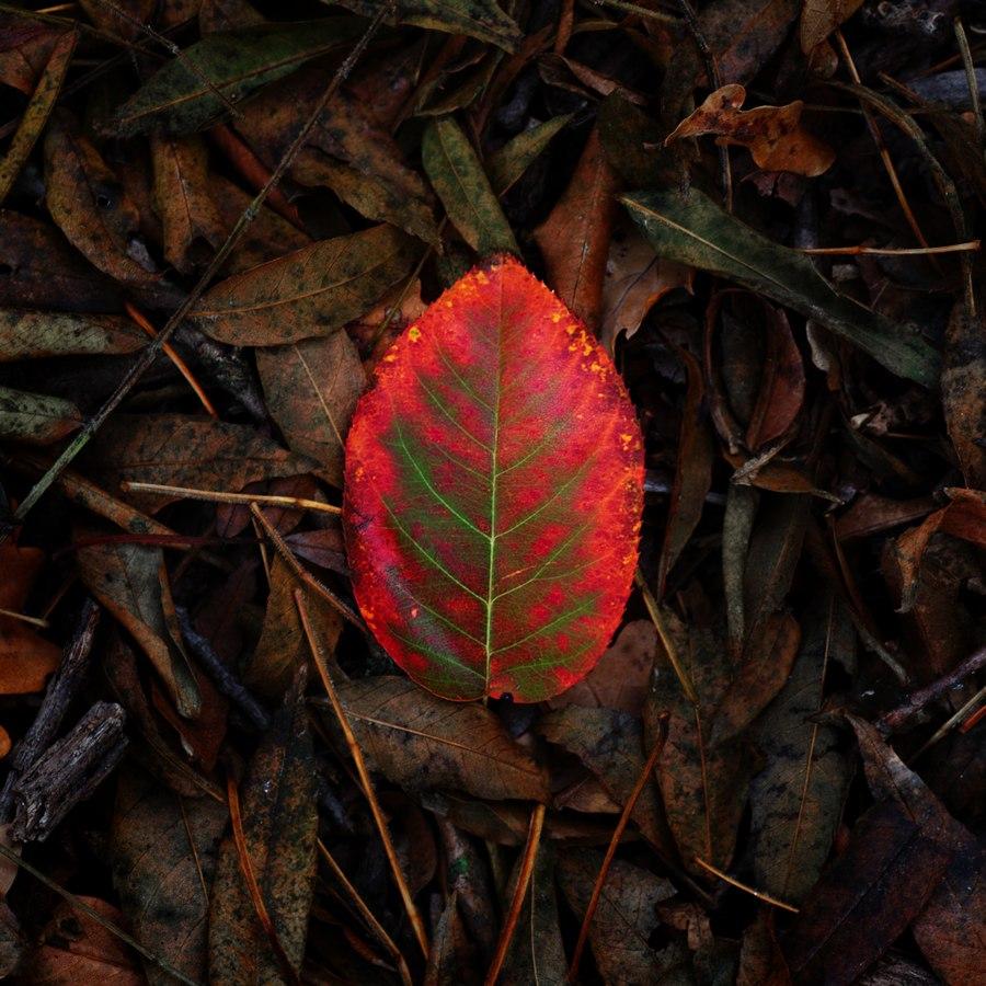 automne00005