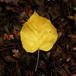 automne00006