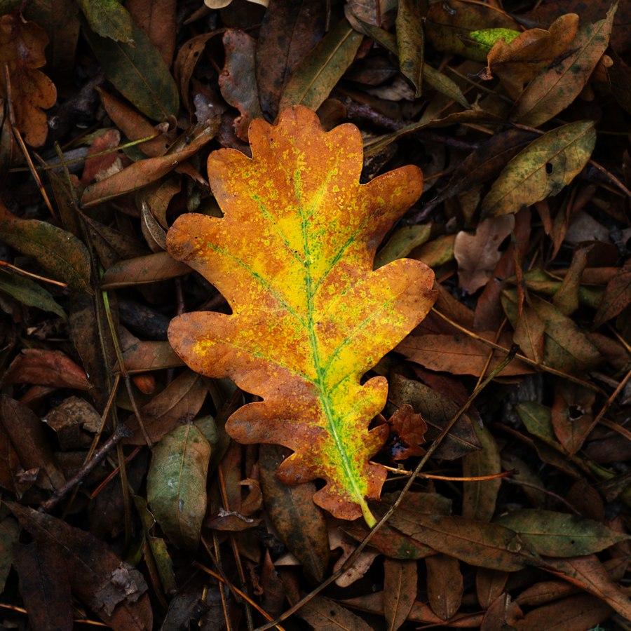 automne00009