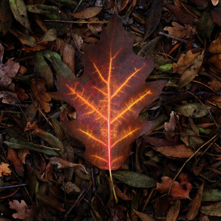 automne00011