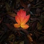 automne00013
