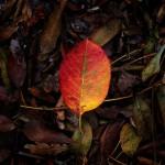 automne00014