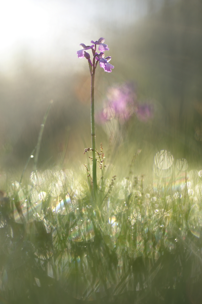 11 - Purple Rain